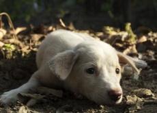 Cachorro deprimido
