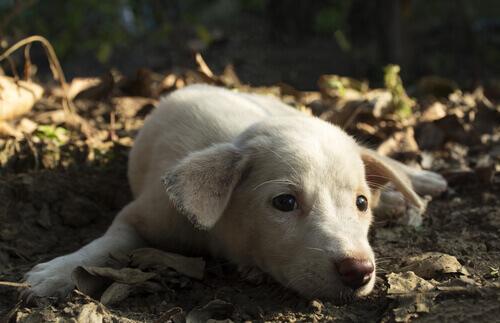 Um cão deprimido pode cometer suicídio
