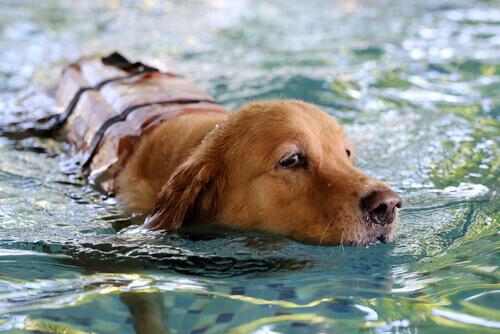 Coisas que os cães fazem melhor que você