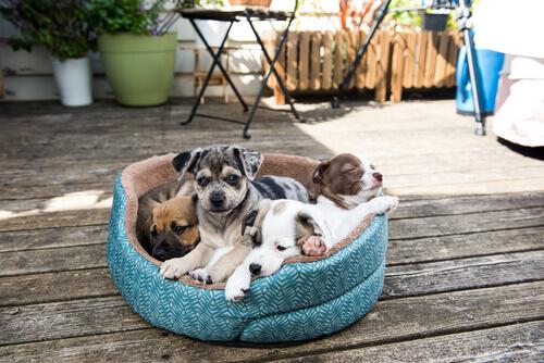 Como deve ser a cama de seu cão