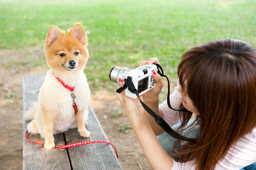 foto-cão-2