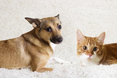 O que é etologia animal?