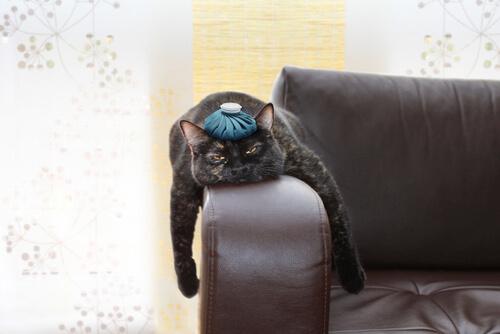Gato estressado