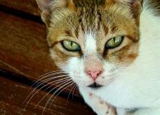 Gato em luto