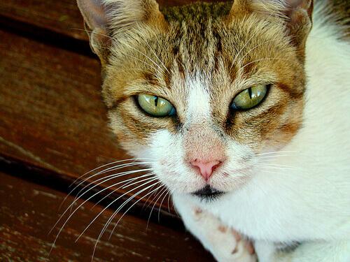 Como ajudar um gato em luto
