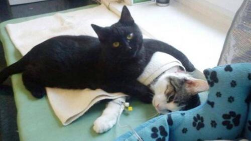 Gato abraçando outro
