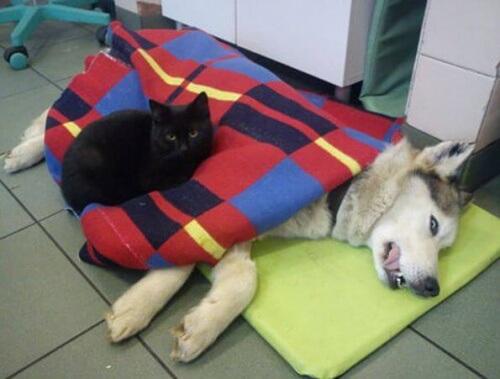 O gato veterinário que cuida de outros gatos