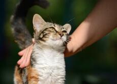 Os gatos adaptam seu comportamento