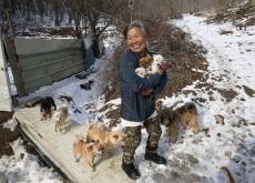 Mulher resgata cães