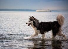 um-cão-resgatado-salva-a-sua-dona-de-seu-noivo-violento