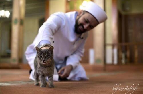 Um árabe do Istambul abre uma mesquita para gatos de ruas