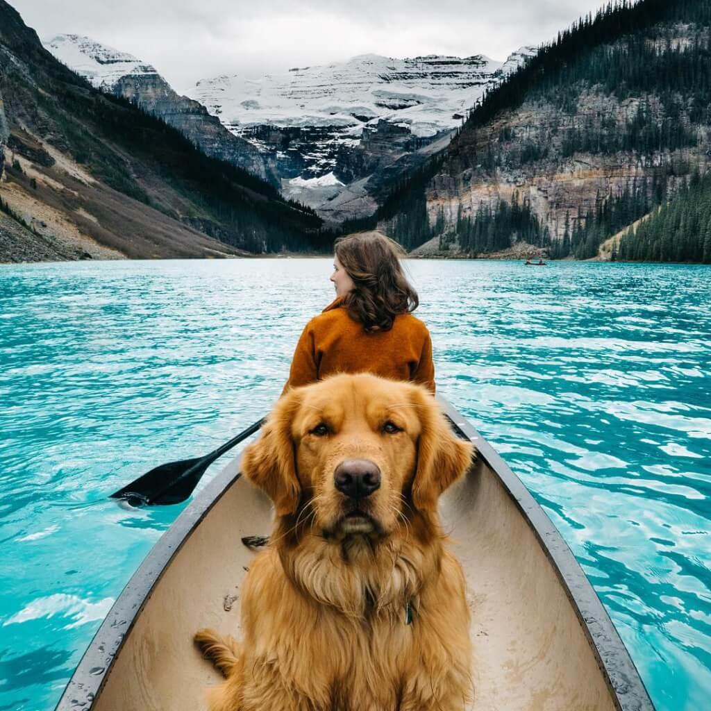 Aspen, um cão com 130 mil seguidores no Instagram