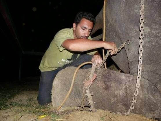 Raju-o-elefante-2