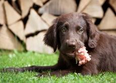 Receitas de lanches caseiros para cães