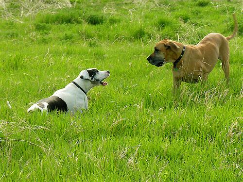 Cachorros no mato
