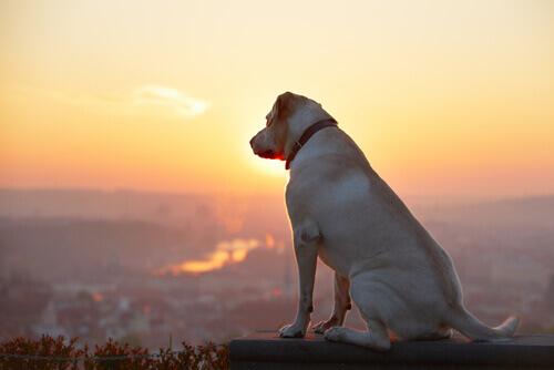Os cães vêm das estrelas