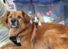 Cão ajuda gatos desprotegidos