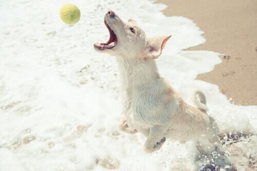 devolver a bola