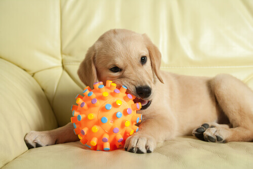 cão-com-brinquedo