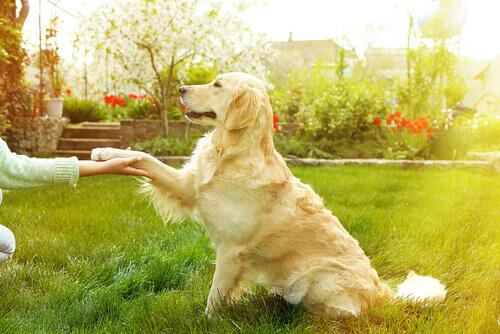 Cão dando patinha