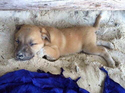 Uma turista alemã adota um cão de rua nas Filipinas