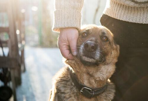 Carinho em cachorro