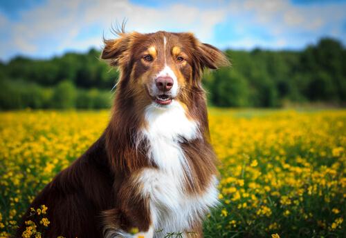Cachorro tomar sol melhora o humor do seu animal