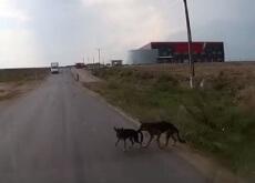 Cão salva amigo de atropelamento