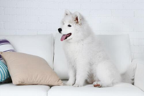 subir no sofá