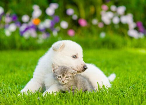 Os cães sentem 5 vezes mais amor por seus donos que os gatos