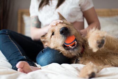 Cachorro brincando com bola