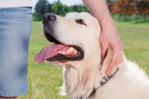 Pessoa fazendo carinho em cachorro