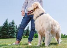 Cão ajuda a cuidar do coração