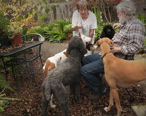 cachorros-demostrando-seu-amor