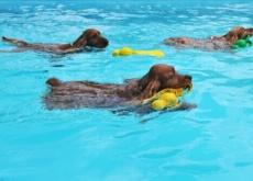 cachorros-nadando
