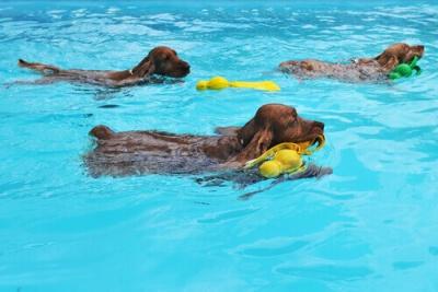 Saiba por que seu cão deve nadar