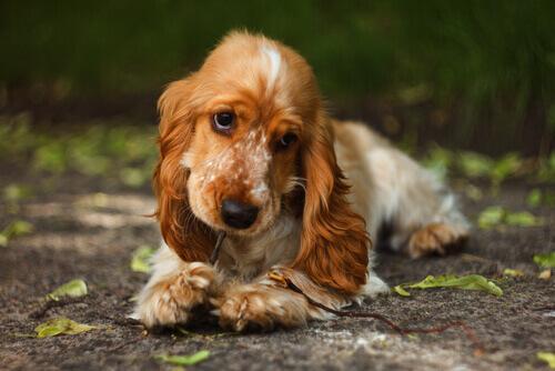 Os benefícios da canela para os cães