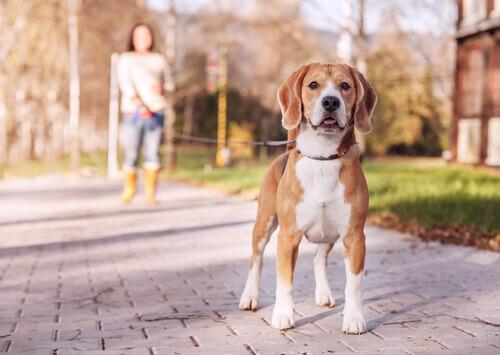 Cachorro com coleira
