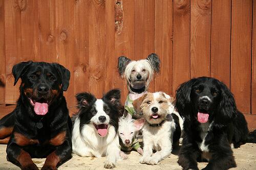 como-evitar-as-manias-dos-cães