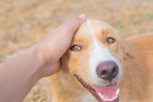 Um aplicativo japonês revela como o seu cão se sente