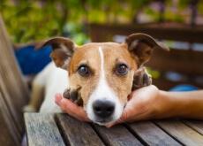 Conselhos para que os vizinhos não odeiem o seu cão