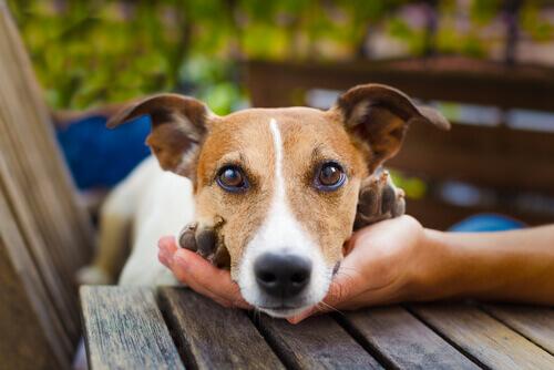 Conselhos para que os seus vizinhos não odeiem o seu cão