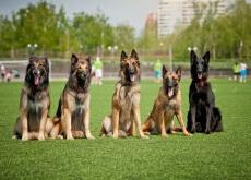 Como ser um bom cuidador de cães