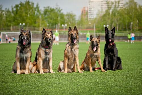 Cuidador de cães, quer ser um? Aqui ensinamos como