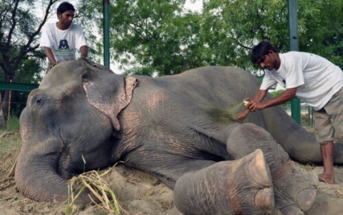 Duas elefantas que estavam presas por meio século presas em um circo são resgatadas