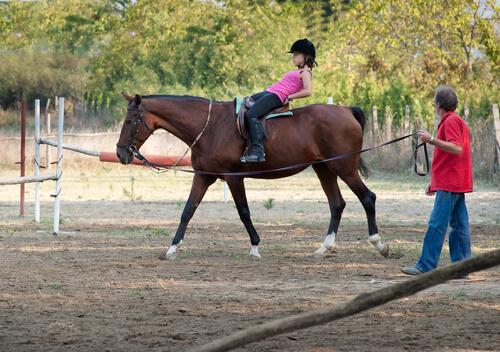 Terapia com cavalo