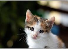 gatinho-usado-como-brinquedo-para-cachorros