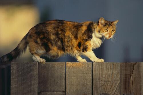 Gato em cerca