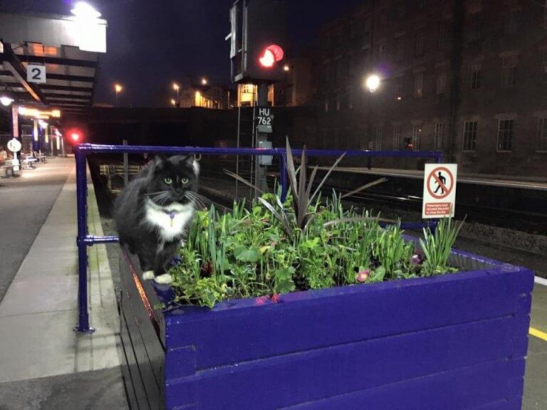 Gato na estação