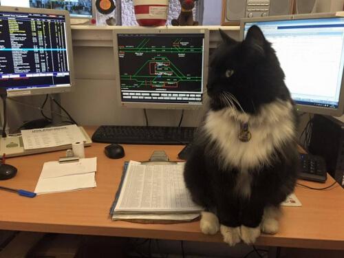 O gato que trabalha em uma estação de trem